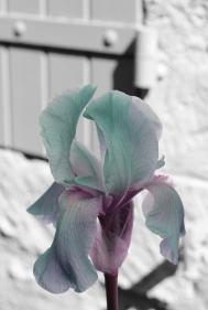020 fleur volet