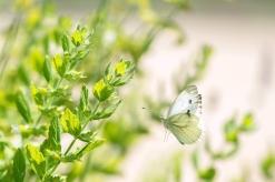 021 papillon figé au vol