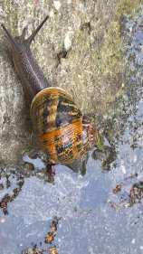024 escargot